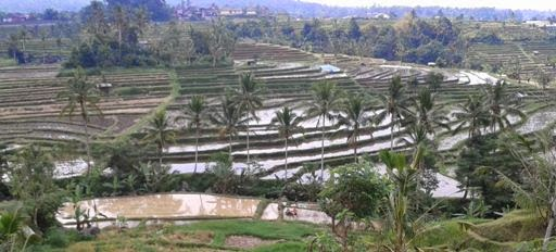 Price Full-Day Tour Package Bali Countryside Jatiluwih Ricefields Terraces - Jatiluwih, Bali Butterfly Park, Wanasari, Penebel, Tabanan, Tanah Lot, Beraban, Temple, Kediri, Sea, Bali, Holidays, Tours, Sightseeing, Trips, Prices, Costs, Rates, Charges, Fees, Attractions