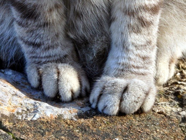 cat pictures paws