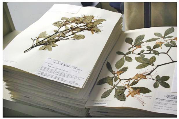 seidenfeins blog vom sch nen landleben herbarium. Black Bedroom Furniture Sets. Home Design Ideas