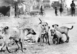Gambar sekumpulan anjing liar