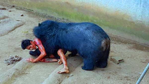 دُب أسود يفترس سائح في حديقة الحيوان في تايلاند