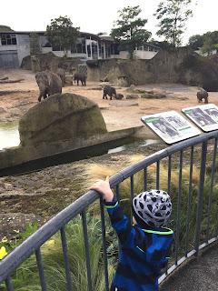 12 von 12 im September: Elefanten im Kölner Zoo
