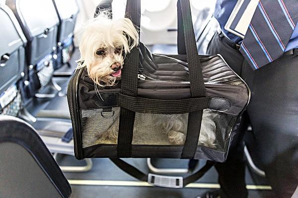 Cách giữ an toàn cho vật nuôi khi đi máy bay