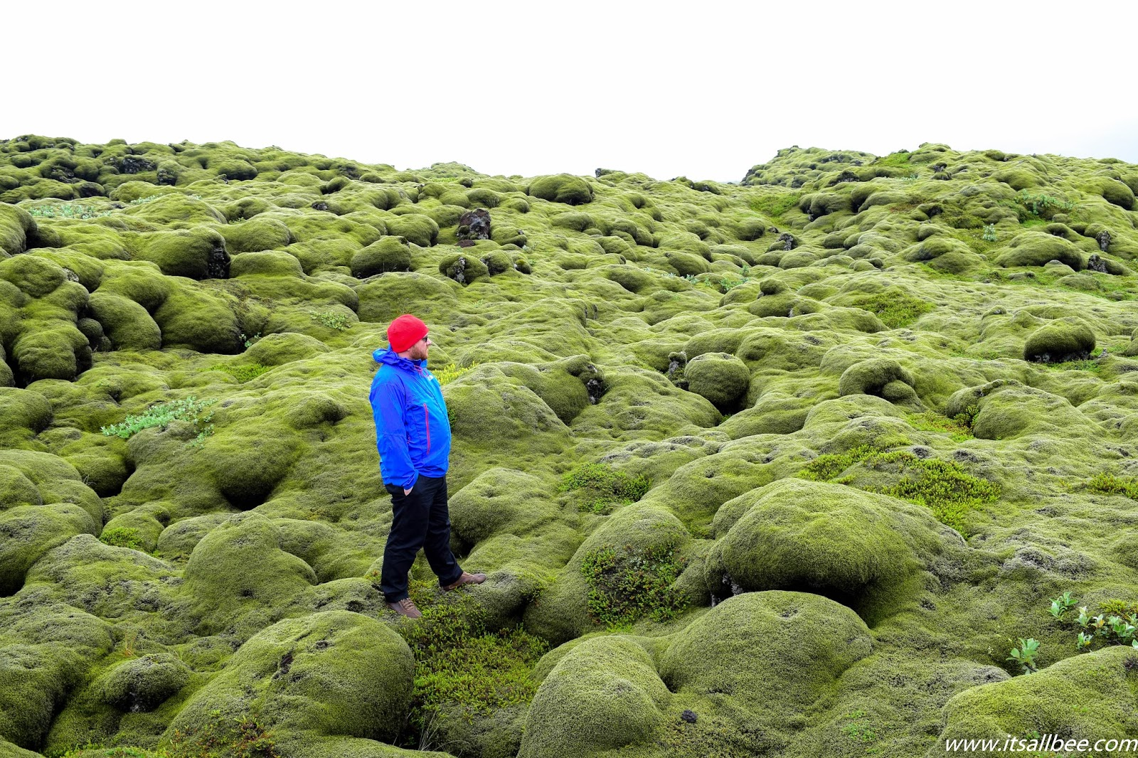Eldhraun Lava Fields in Iceland | Iceland Lava Fields