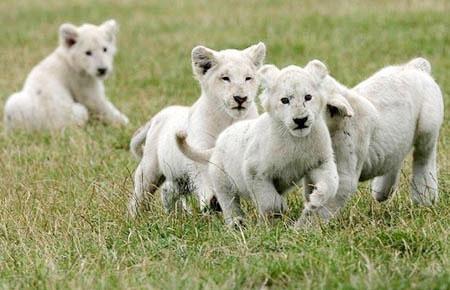 10 loài thú cưng có giá bằng cả gia tài