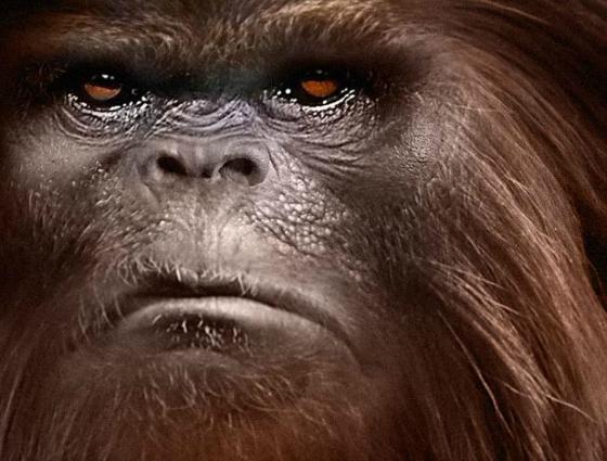 8 Ft. Dark Reddish Bigfoot Observed in Pike County, Mississippi