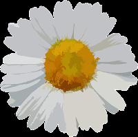 daisy divider