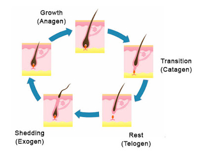 What are the causes of hair fall 2018