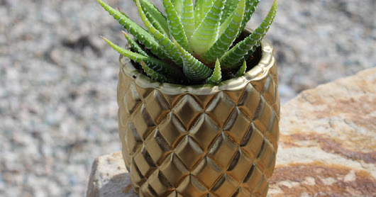 Pineapple Succulent Planter!