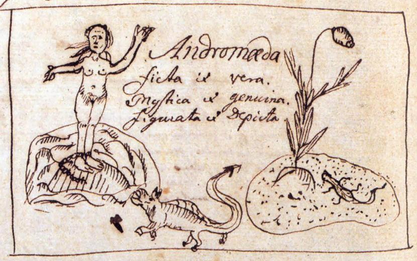 Dibujo de Linneo sobre el género Andromeda