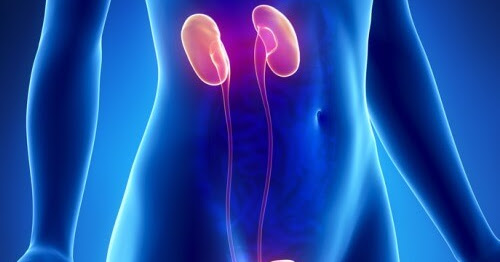 Kidney Pain !!! Some VERY EFFECTIVE Herbal and Home Remedies.