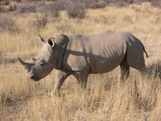 Raspberry Pi and Cambridge Consultants saving the rhino | Cambridge Business News | Cambridgeshire Local Business & Corporate News