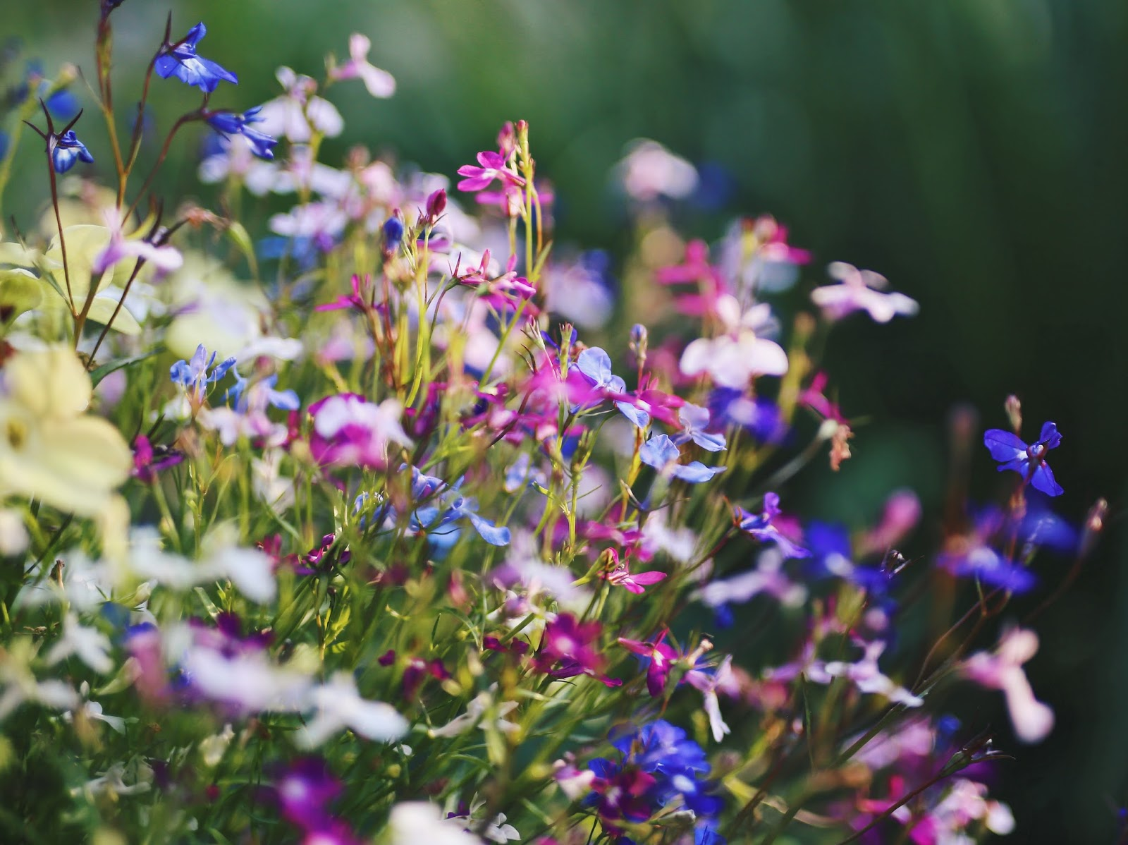 Flowers, Garden, Blooms, Pretty, Katie Writes, Blog,
