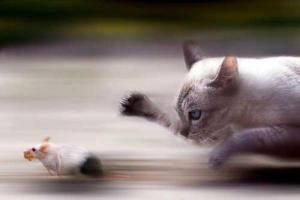 """Những """"mẩu tin"""" thú vị về thú cưng có thể bạn chưa biết (Phần 2)"""