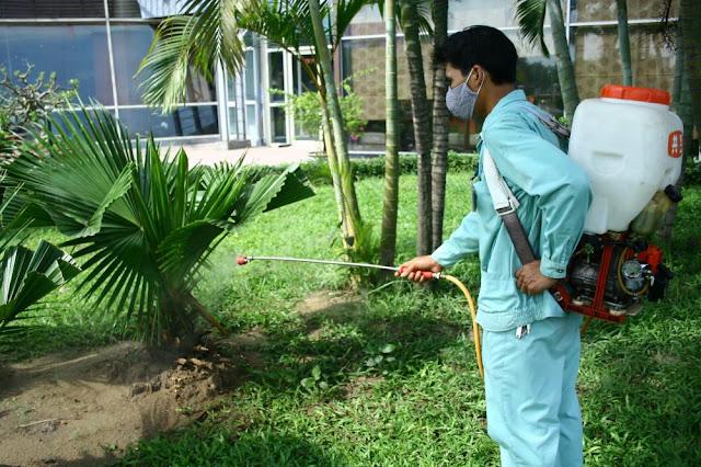 Tư vấn, chăm sóc cây cảnh tại nhà