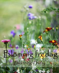 http://blandrosorochbladloss.blogspot.no/2016/12/blommig-fredag-nolltolerans.html