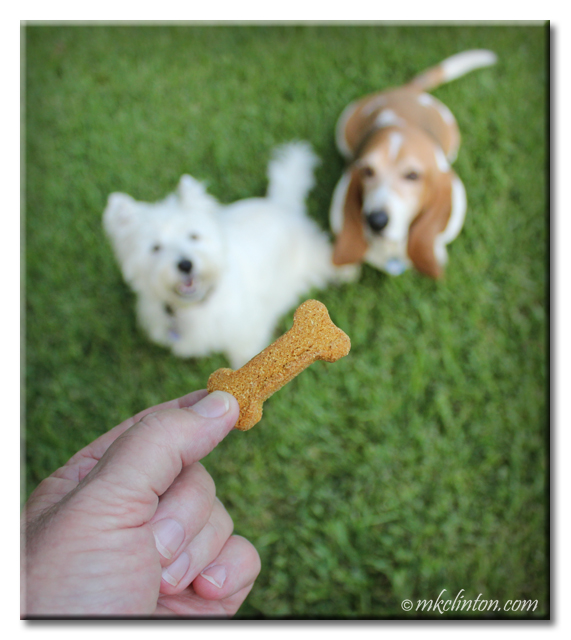 Two dogs looking a dog treat