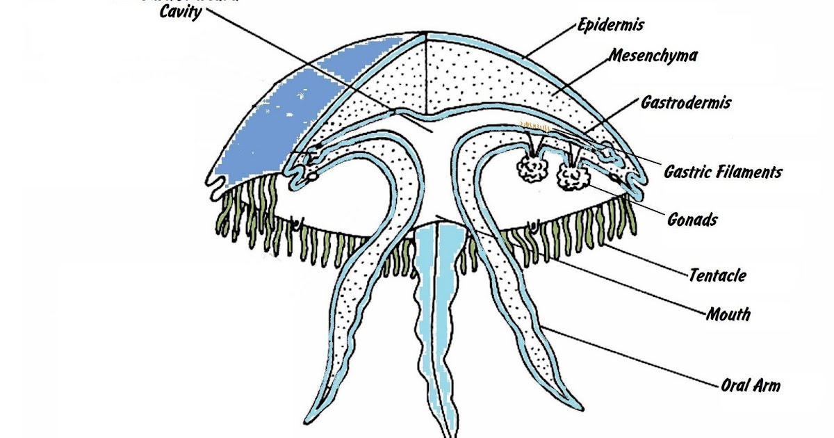 The Geography of Jellyfish: What Exactly is a Jellyfish?