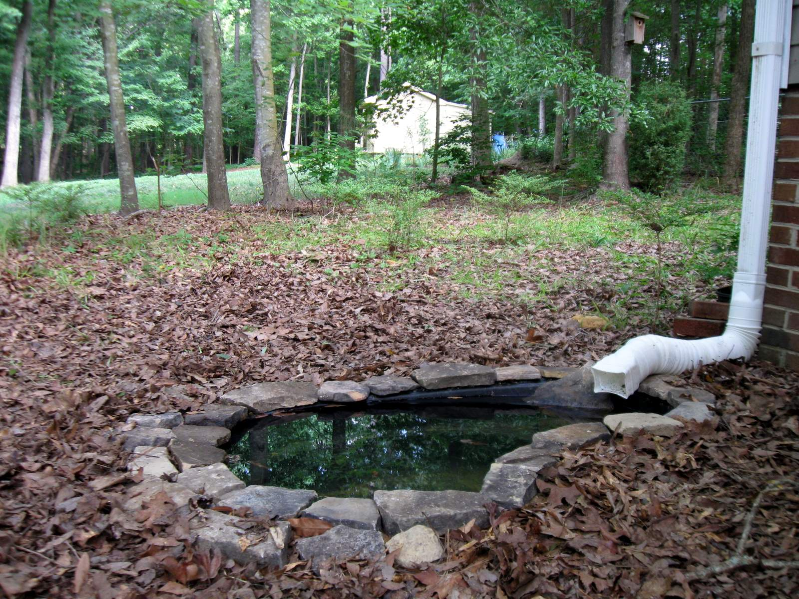 Backyard Nature: Front Yard Pond in Progress on Front Yard Pond id=91814