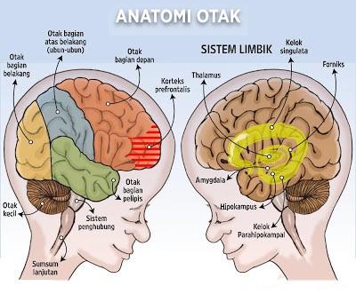 Cara Melatih Kebugaran Otak