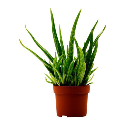 Animal Jam Mercury Aloe Vera Plant And Diamond Anklet