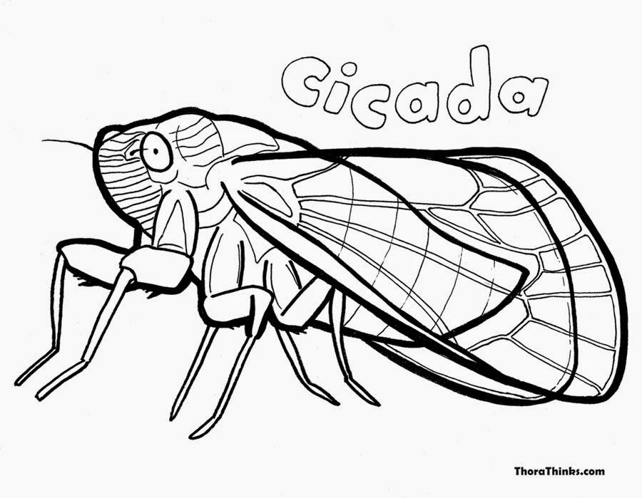 http://printablecolouringpages.co.uk/?s=image+cicada