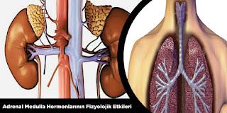 Adrenal Medulla Hormonları