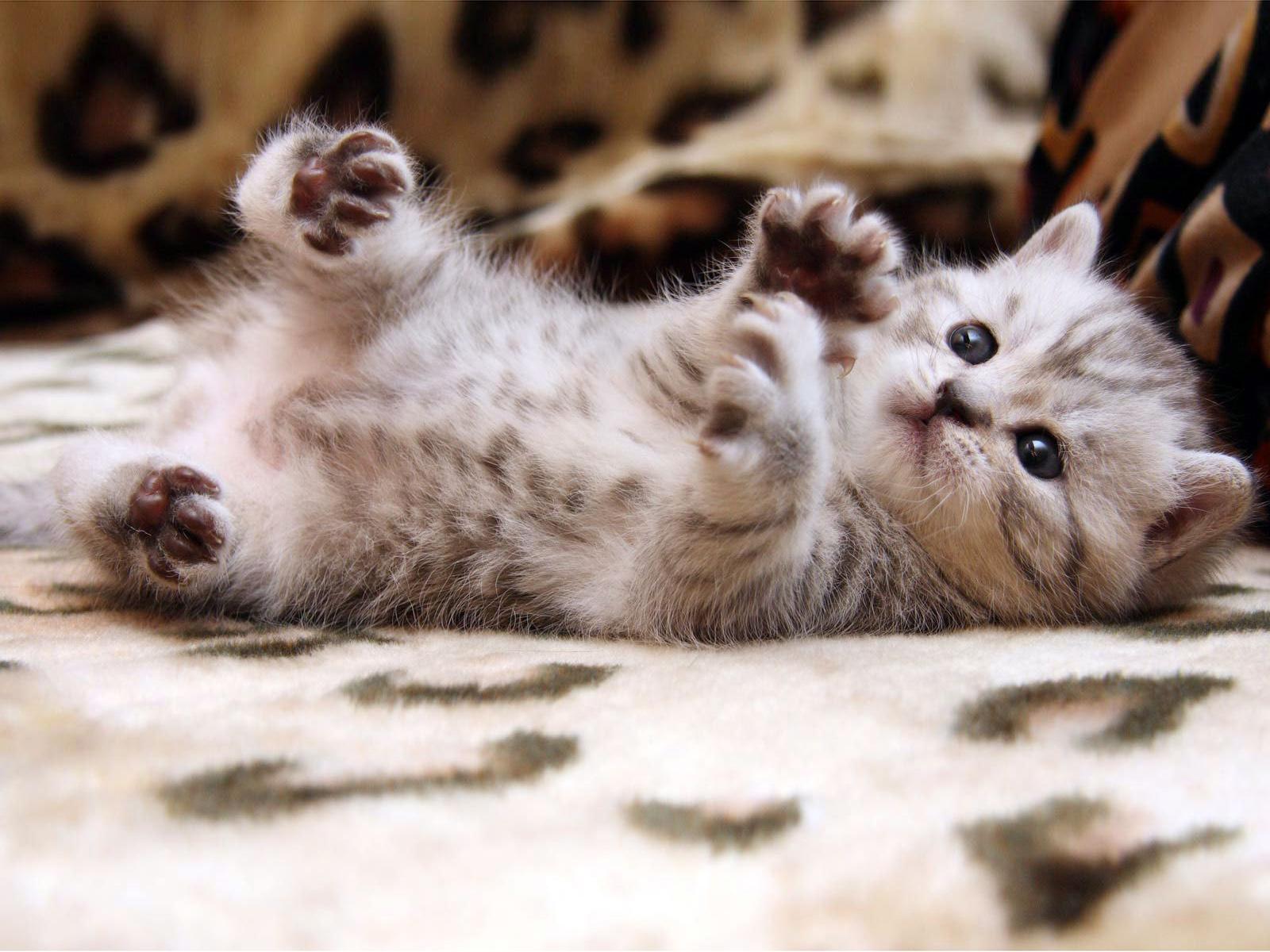 Cute Cats #7 | Cute Cats