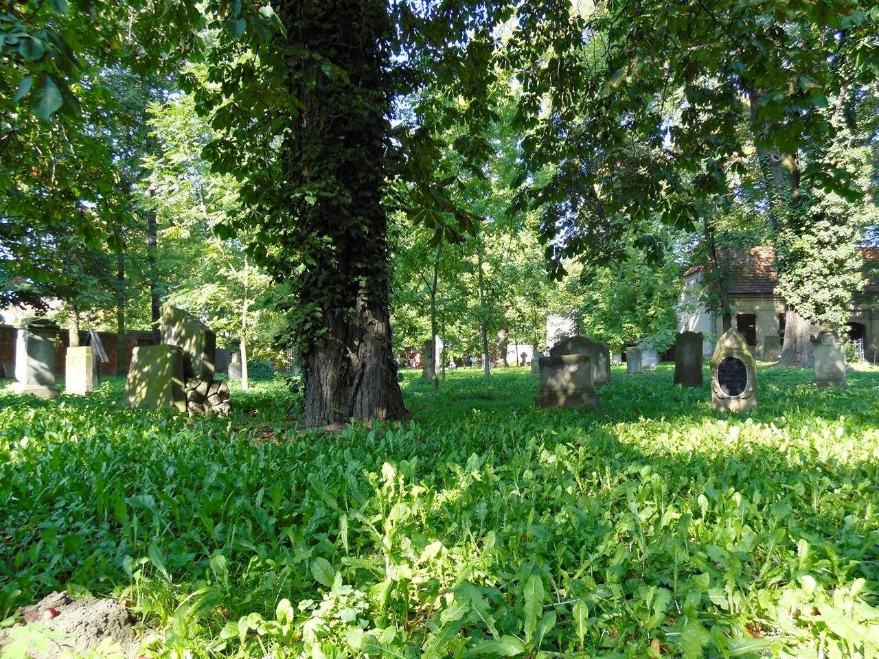 cmentarz ewangelicki we Wschowie