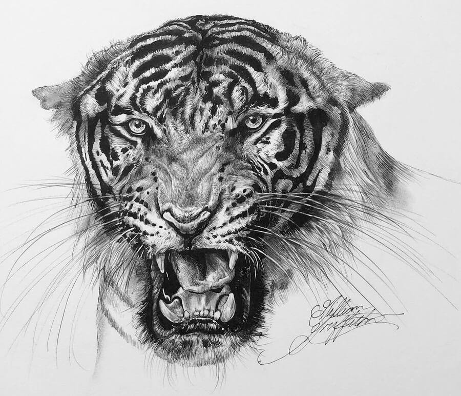 12-Growling-Tiger-Gillian-Griffiths-www-designstack-co