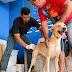 Campanha de Vacinação Antirrábica segue até dia 28 no RN