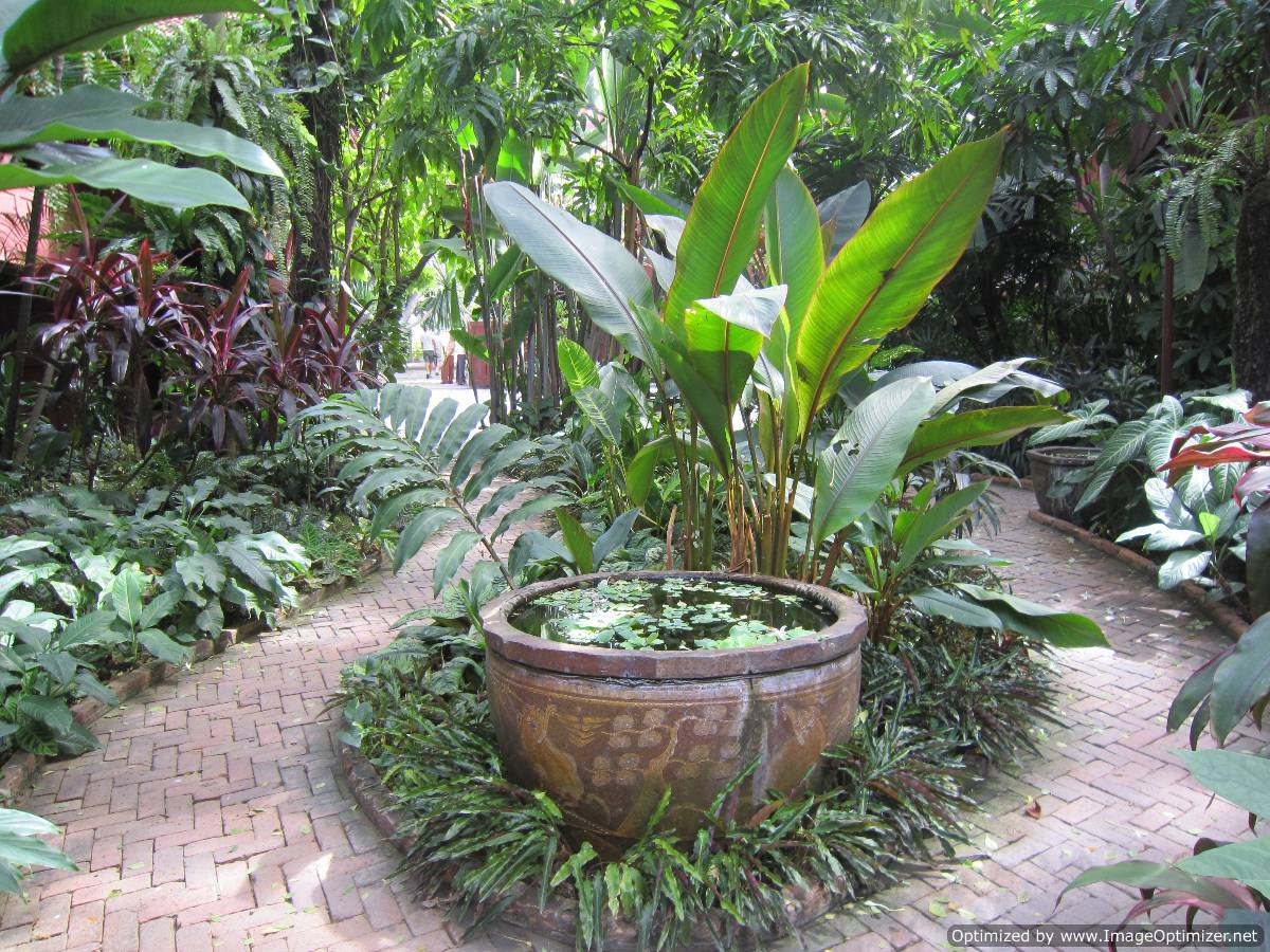 Rambling towards an exotic garden paradise sawatdee khrap for Unusual trees for small gardens
