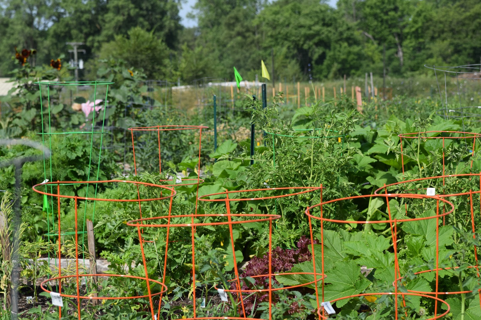 Urban Community Gardens Are Popping Up Everywhere Within Detroit. One Of  Detroitu0027s Big Initiatives Is To Use The Vacant Land Within The City Limits  As ...