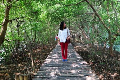 Tiket Masuk Wisata Hutan Mangrove PIK Bulan Januari 2019