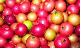 manfaat buah ceri untuk wajah,manfaat buah ceri kampung,5 manfaat buah cherry untuk kecantikan kulit wajah,manfaat buah ceri untuk kesehatan,ini dia 10 manfaat buah ceri untuk cantik dan sehatmu,manfaat buah,4 manfaat buah ceri untuk wajah dan pengaplikasiannya,manfaat buah ceri bagi kesehatan dan kecantikan kulit wajah,manfaat buah seri,manfaat buah ceri kersen,manfaat untuk kesehatan