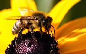 çiçekte arı