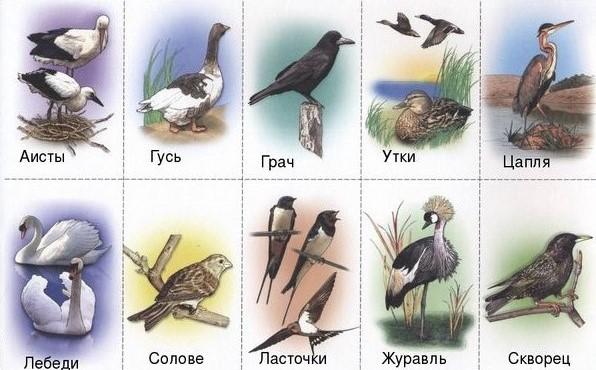 Картинки по запросу лексическая тема перелетные птицы подготовительная группа