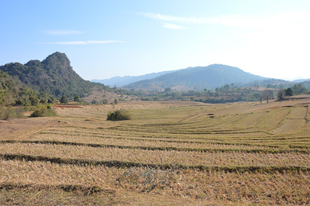 Rizière proche de Kalaw