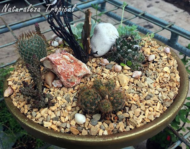 Decoración con plantas suculentas ideal para exterior