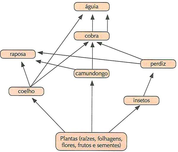 UFG Analise o diagrama a seguir. A teia alimentar representada evidencia as relações interespecíficas de uma comunidade que ocorre em vários ecossistemas