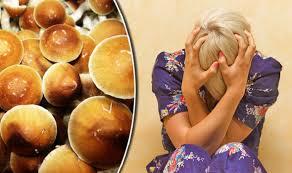 Magic Mushroom dan Bahayanya