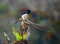 Burung yang mempunyai Tanduk