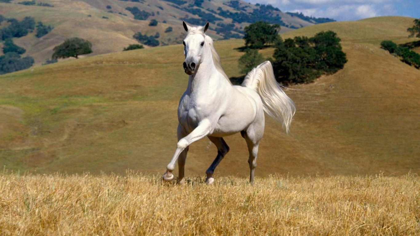 Simple   Wallpaper Horse Ultra Hd - 4af756040fa3152d7748081409b06479  Image_628821.jpg