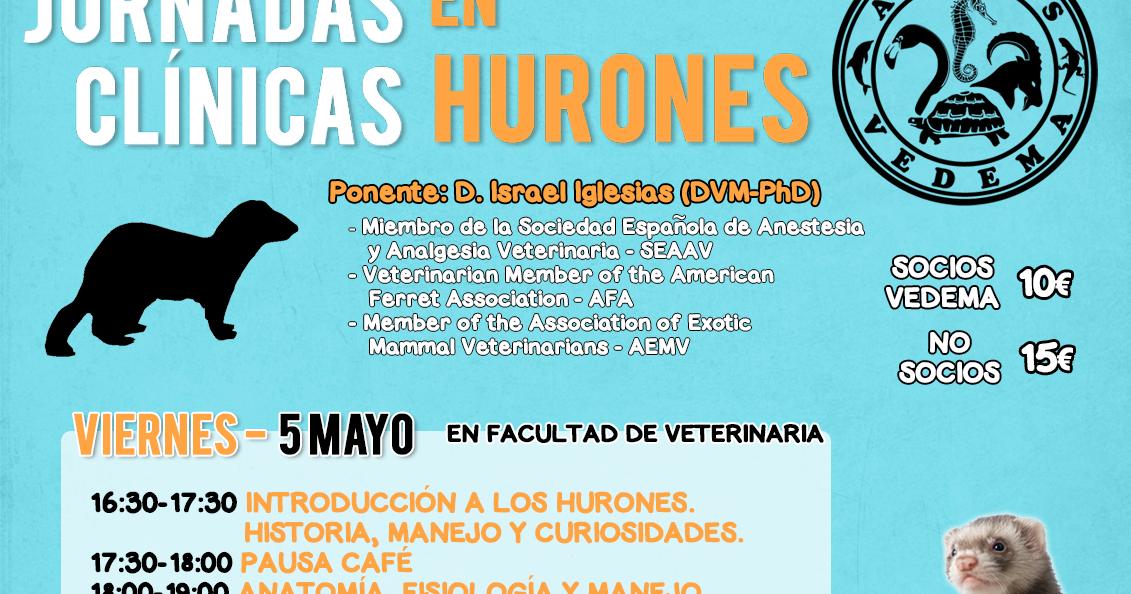 A.V.A.F.E.S.- V.E.D.E.M.A.: Jornadas clínicas en hurones