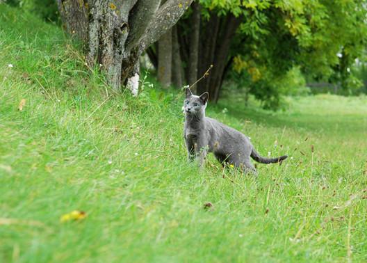 Dlaczego koty zakopują swoje odchody?