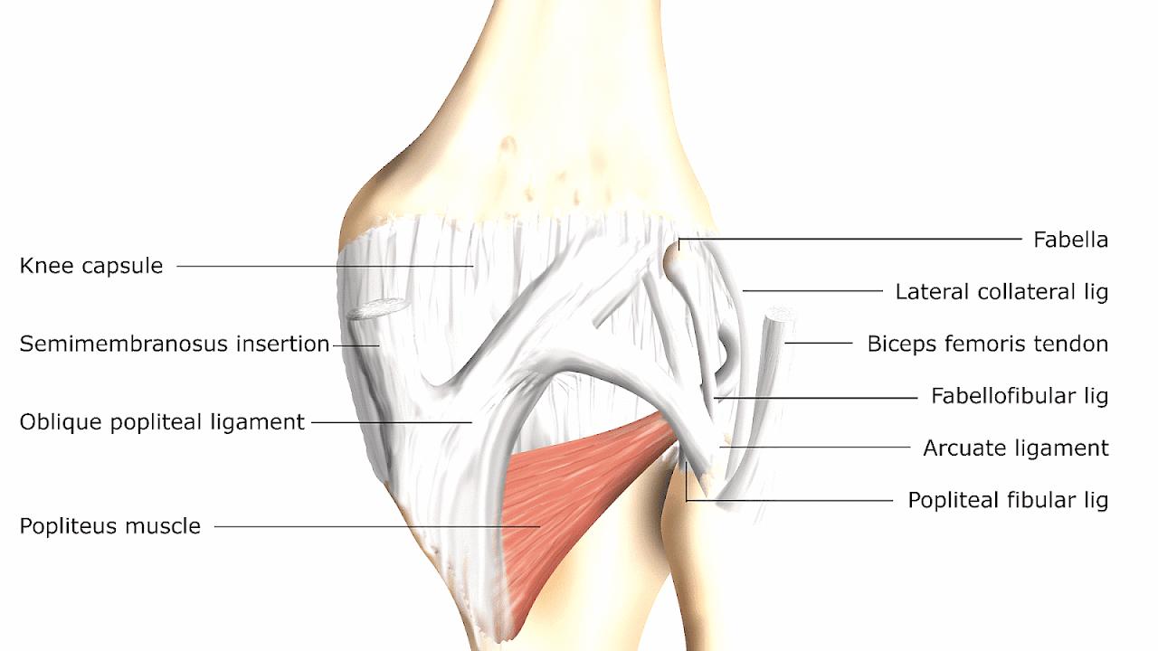 Diagram Of Knee Pain | Medial Knee Injuries Injury Injury Choices