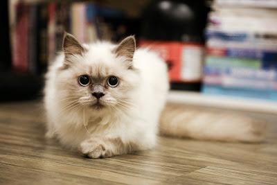 Dijilat Kucing Apakah Membatalkan Shalat ?