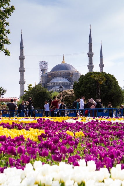 Tappeto di tulipani e Moschea blu-Istanbul