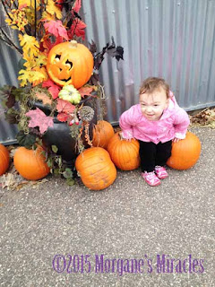 Visit to the Farm Area at the Minnesota Zoo picture with pumpkins