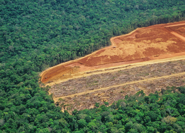 Amazon deforestation is close to tipping point